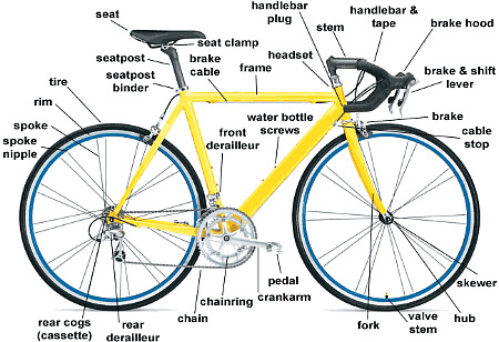 anatomy-road-bike
